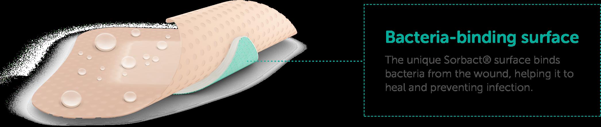 foam_gentle_border_illustration_eng