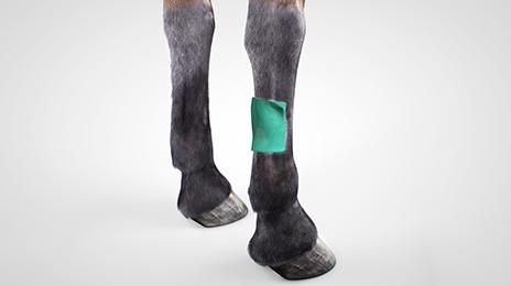 vet-horse-compress-2
