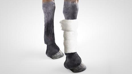 vet-horse-gel-dressing-3