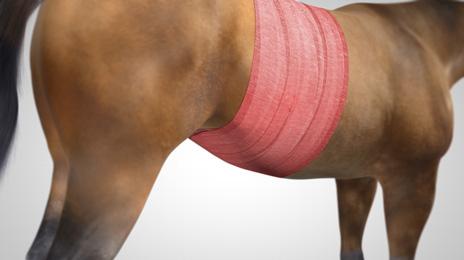 vet-horse-superabsorbent-3